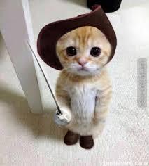 kitten with sword